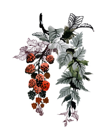 Hand drawn painting branches with summer berries on white background.