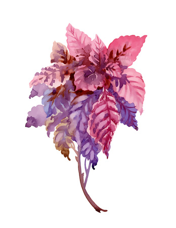 Flower watercolor illustration. Spring and summer.