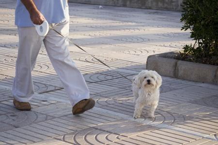 Hund Standard-Bild - 10977757