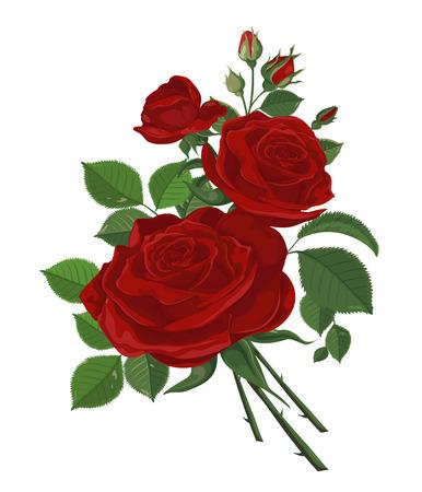 Vettore. Mazzo di rose. Fiore rosso. Sfondo floreale d'epoca. Illustrazione dell'acquerello. Bocciolo di rosa isolato su bianco. Rose, boccioli, foglie e fiori. Matrimonio, compleanno, design, biglietto d'invito modello.