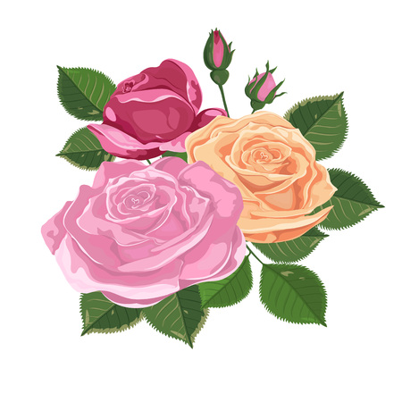 Watercolor illustration. Bouquet of roses isolated on white. Roses, buds, leaves and flowers. Vector set of blooming flowers for design. Decoration for wedding invitations and greeting cards-vector. Illustration