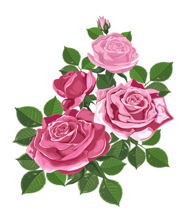 Vector. Bouquet of roses. Watercolor illustration. Rose Bud isolated on white. Roses, buds, leaves. Wedding, birthday, design, invitation card Template