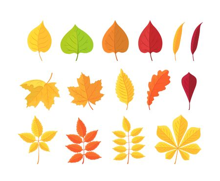 Set of autumn leaves isolated on white background. Botanical forest plants, yellow, red autumn leaf, fallen dry leaves. Cartoon leaf collection in flat style. Vector