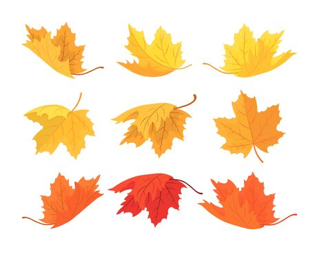 Maple leaf in red, yellow, brown and green isolated on white. Set of different autumn leaf shape for seasonal holiday greeting card design. Vector illustration.