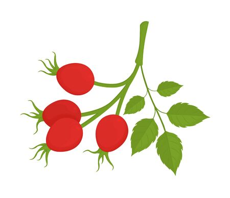Rosehip branch with red berries isolated on white background. Summer fruits colorful illustration. Health care product. Great for labels, posters, banners, printing. Vector