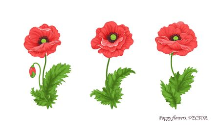 Flower collection. Poppy flowers. Illustration of three bouquets of poppy with stem buds and leaves. Watercolor. Floral Botanical illustration for decor design or holiday greeting template. Vector Vecteurs