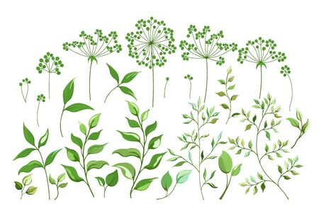 A set of Botanical elements, field flowers grass leaves branches. Collection of garden and wild foliage flowers branches isolated on white. Vector graphics.