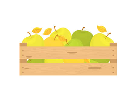 Box with apples isolated on white background. Fresh fruits are collected in a wooden box. Flat design style. Vector graphics. 向量圖像