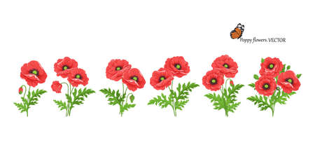 Poppy flowers. Floral set of five poppy bouquets with stem buds and leaves.
