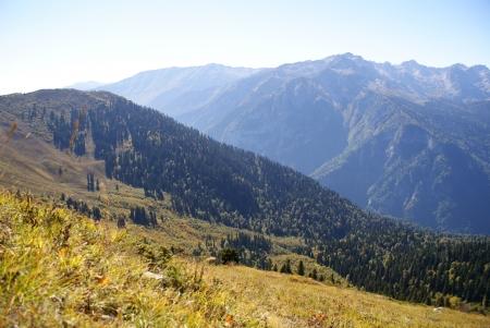 abkhazia: The slope of the mountains, forested, Abkhazia
