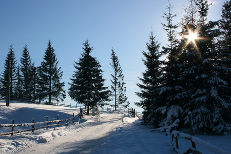 snow road: Snow road, trees in snow and the blue sky with clouds.