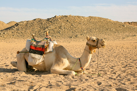mounts: Camel on the background of the blue sky and mounts. Stock Photo