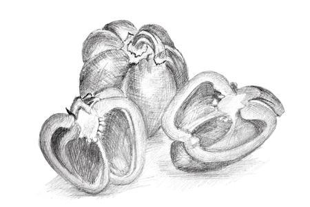 illustrates: Pencil drawing by the pepper on the white paper. Original pencil or drawing charcoal, and hand drawn painting.