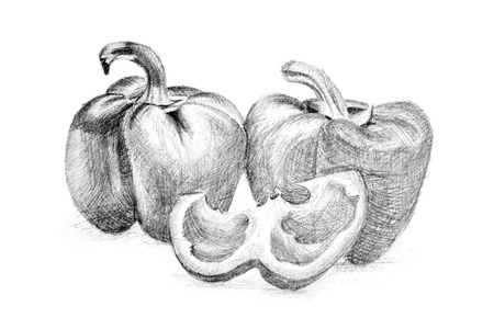 Pencil drawing by the pepper or paprika on the white paper. Original pencil or drawing charcoal, and hand drawn painting.