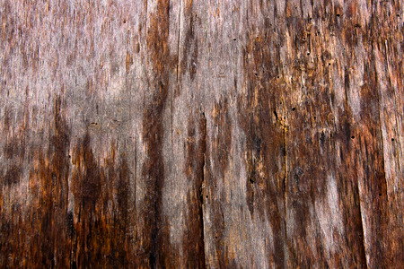 bark peeling from tree: Green moss and mold growing on the old tree. Wood textured background with green moss texture