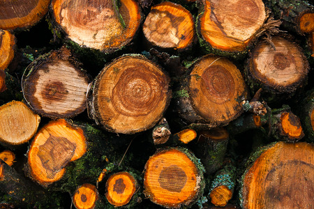 pile of logs: Logs are stacked in a pile.