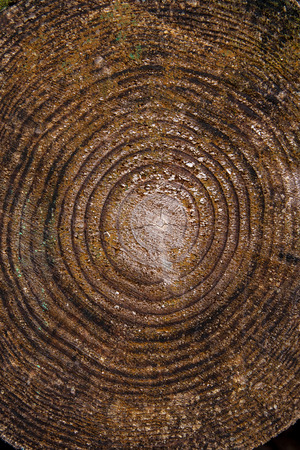 annual ring annual ring: Close up view of cross section of tree trunk showing growth rings. Section of the trunk with annual rings for the background. Background texture of natural wood. Stock Photo