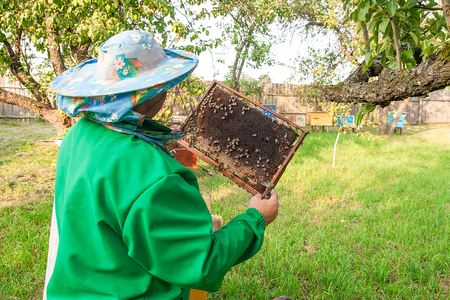 comb: Beekeeper checking a beehive to ensure health of the bee colony or collecting honey. Stock Photo