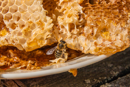 Close up view of the working bee on the honeycomb with sweet honey. White plate with section of wax honeycomb from beehive on the vintage wooden background. Honey is beekeeping healthy produce. Bee honey collected in the yellow beautiful honeycomb.