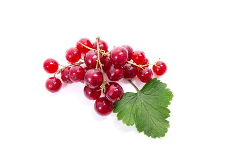 白い背景で隔離の赤スグリ ベリーのビューを閉じます。レッド カラントの小さな緑の葉と赤スグリの束。 写真素材