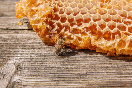 Close up view of the working bee on the honeycomb with sweet honey. Section of wax honeycomb from beehive on the vintage wooden background. Honey is beekeeping healthy produce. Bee honey collected in the yellow beautiful honeycomb.