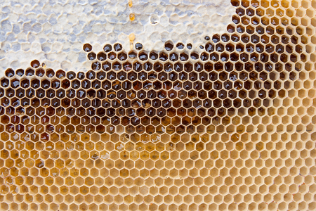 Close up view of yellow honeycomb with sweet honey. Piece of yellow honeycomb with sweet honey as background.