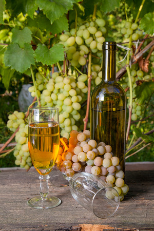 Glass of white wine and empty glass, grapes bunch and bottle of wine on vintage wooden background on the vineyard background. Bunches of green and yellow berries of grapes on branch with leaves in vineyard as background.