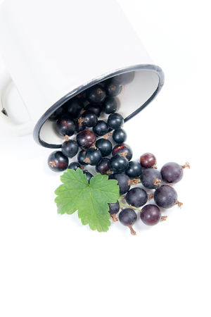 Close up view of white cup with black currant berry isolated on white background. A white cup with black currant berry and small bunch of black currant with small green leaf of currant bush in front of cup.