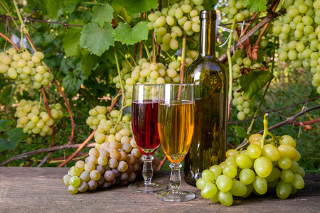 Two glasses of red and white wine with grapes bunches, bottle with wine on vintage wooden background on the vineyard background. Bunches of green and yellow berries of grapes on branch with leaves in vineyard as background.