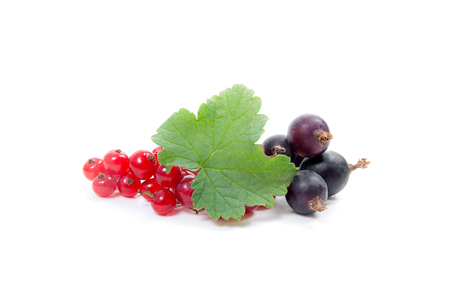 Close up view of black and red currant berry isolated on white background. A bunch of black and red currant with small green leaf of currant bush.