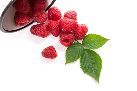 Close up view of white cup with fresh raspberries fruits and big green leaf of raspberry bush isolated on white background