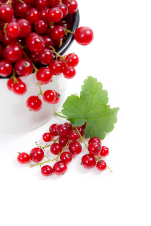 Close up view of white cup with red currant berry isolated on white background. A white cup with red currant berry and small bunch of red currant with small green leaf of currant bush in front of cup.