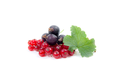 Close up view of black and red currant berry isolated on white background. A bunch of black and red currant with small green leaf of currant bush. Reklamní fotografie