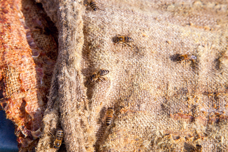 Close up view of bees swarming on vintage textile background.