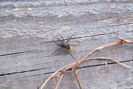 Macro shot of small grey spider on wooden background. Tiny / Small little spider landing on vintage wooden background. Banque d'images