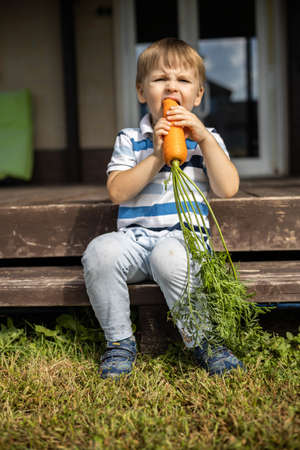 A little boy eats a carrot grown in his garden. The child sits on the steps near the house.