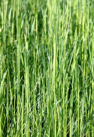Lawn grasses in the forest Stock Photo