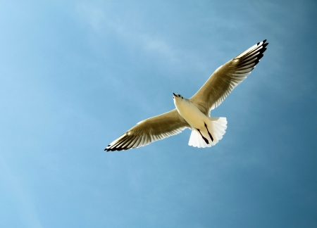 An image of a seagull in the sky Stock Photo