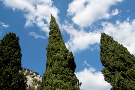 Coniferous trees against the sky with clouds Stock Photo - 20370559