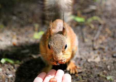 Portrait of a beautiful squirrels eat with your hands photo