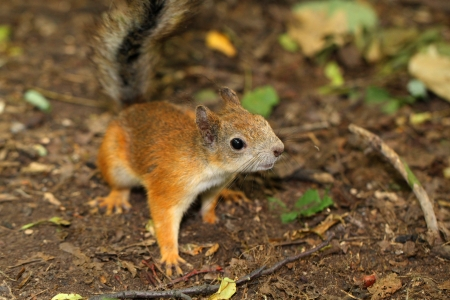 A curious squirrel Stock Photo - 20849189