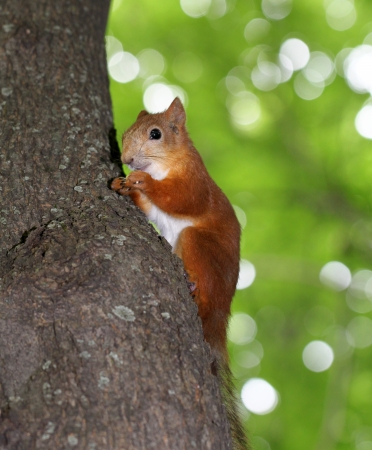 funny squirrel eats a nut Stock Photo - 20849239