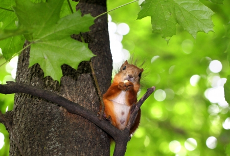 Squirrel chews nut sitting in a tree Stock Photo - 20849185