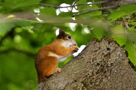 Squirrel eating a nut on a tree Stock Photo - 20867129