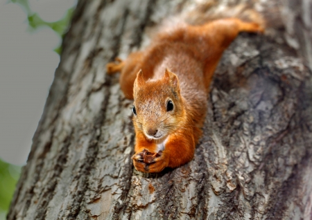 Ardilla colgando de un árbol Foto de archivo