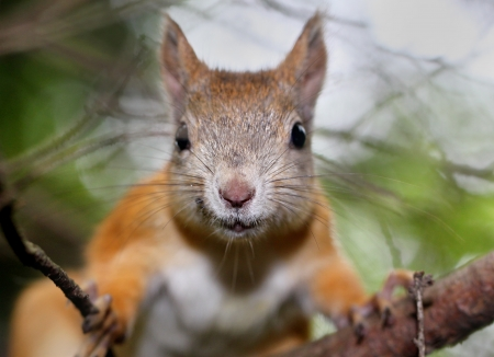 Squirrel portrait with a free space Stock Photo