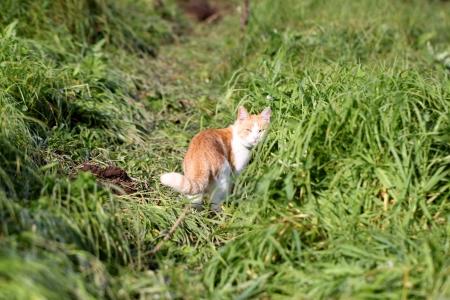 Cat standing in green grass photo
