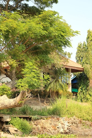 twining: House in the green foliage on the river bank Stock Photo
