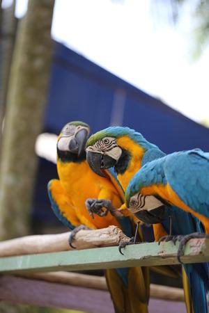 Big beautiful a macaws photographed close up photo