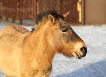 Portrait of a beautiful donkey photographed close up photo